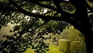 Wychwood Garden and Nursery