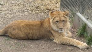 Zoodoo Wildlife Park