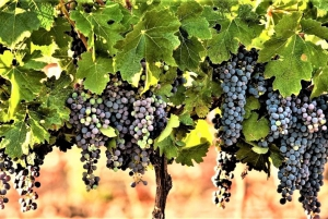 Wine Tour North of Israel from Tel Aviv