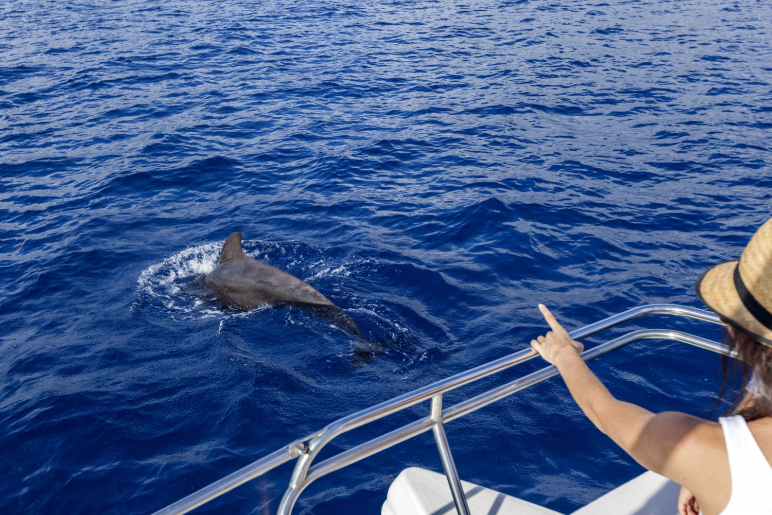 3-Hour Dolphin and Whale Watching Cruise