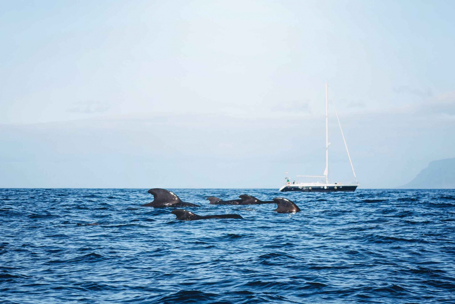 3-Hour Whale Safari Boat Trip From Puerto Colón