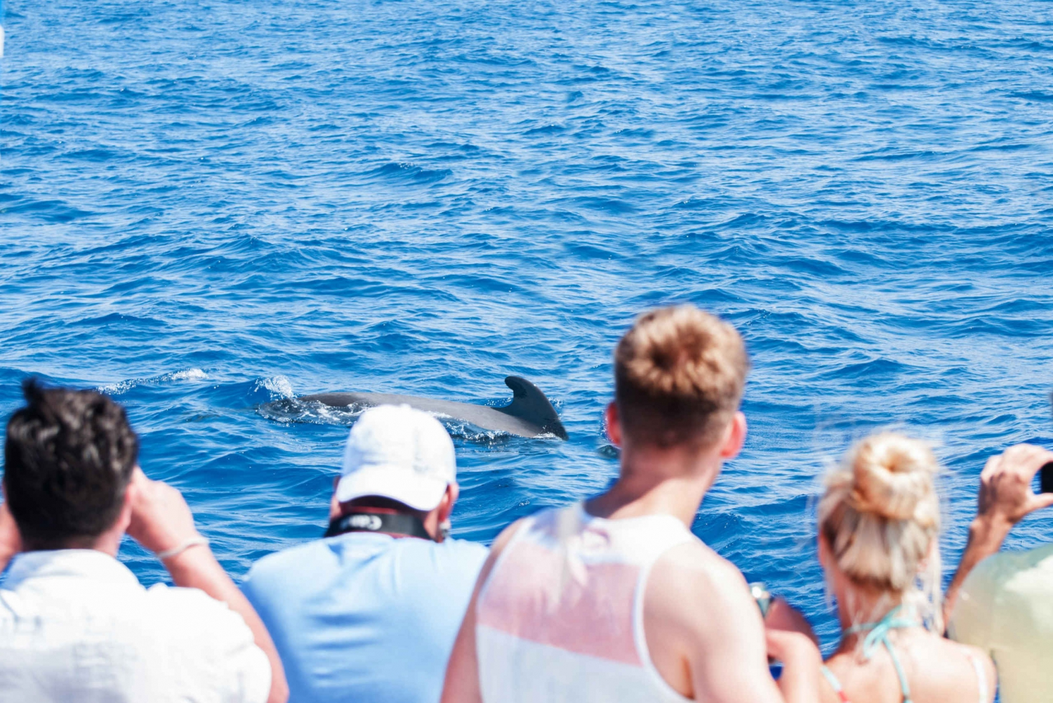 3-Hour Whale Watching Tour with Snorkeling
