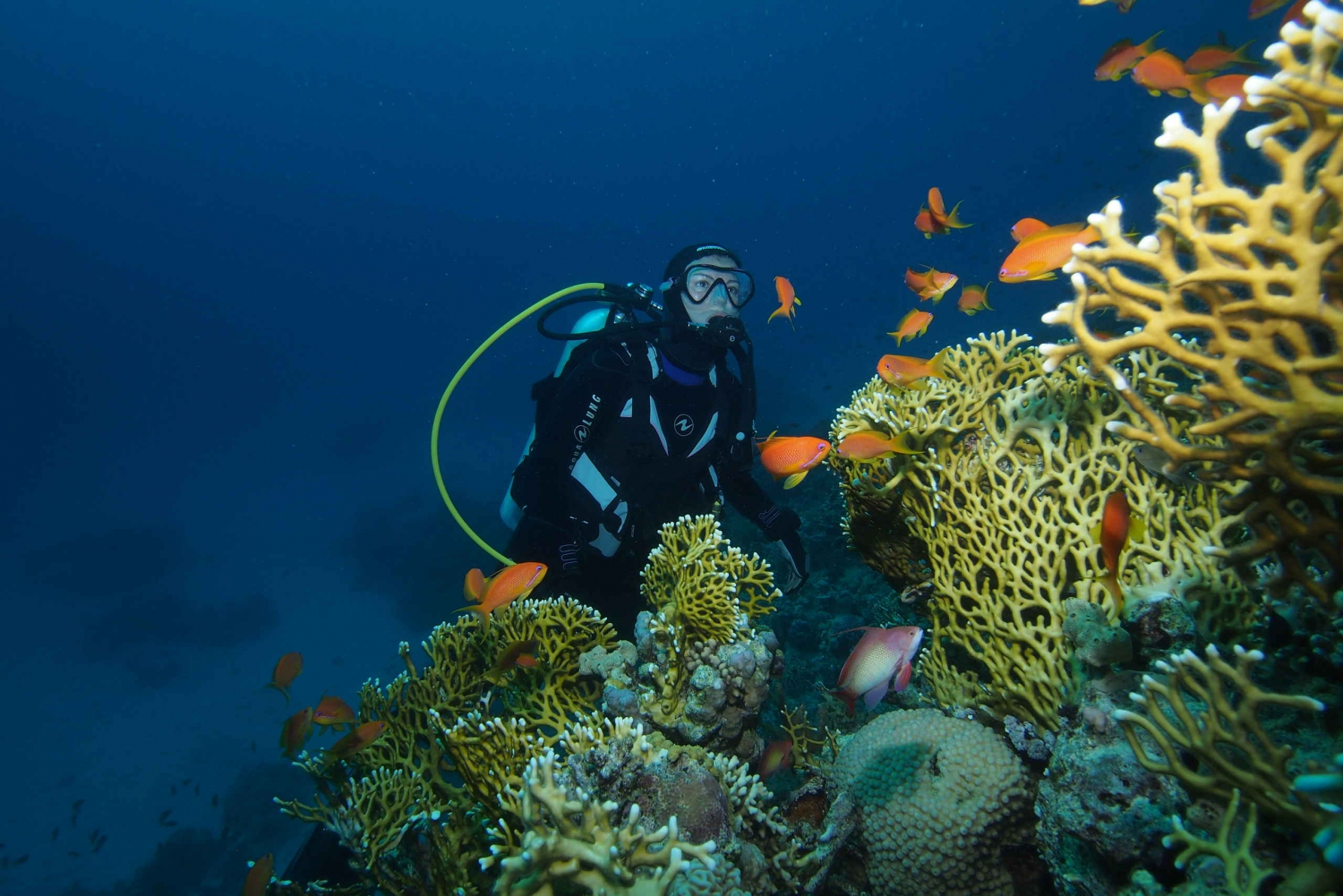 Full-Day The Best Dives for Certified Divers
