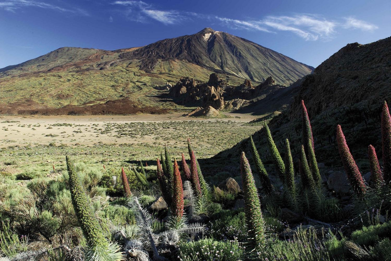Mount Teide Full-Day Small Group Tour