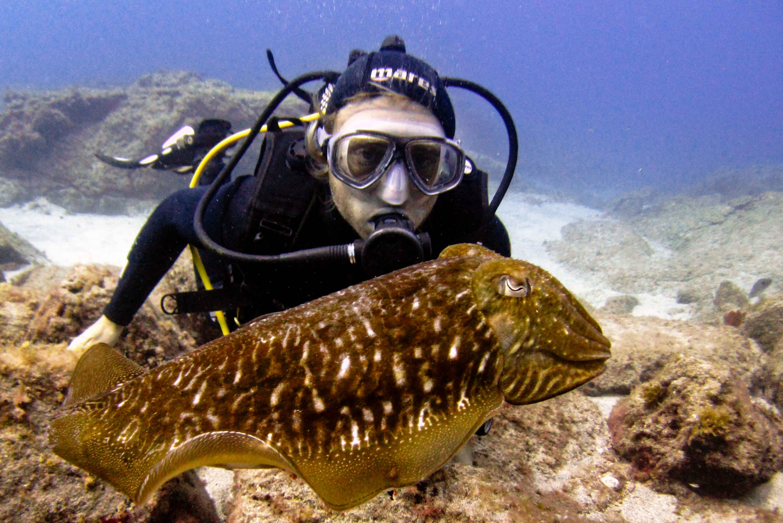 San Miguel de Abona: 4-Hour PADI Discover Scuba Diver