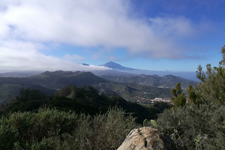 Santa Cruz de 2-Hour Hiking Tour in Anaga Forest