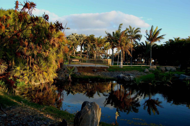 Santa Cruz: Palmetum & Highlights Guided Tour