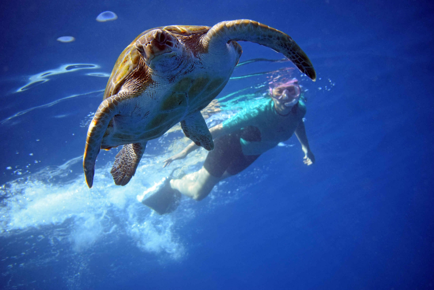 Snorkeling with Turtles and Kayaking with Dolphins