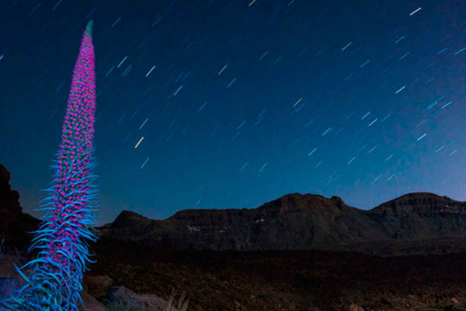 Teide Night Experience with Dinner and Stargazing