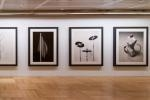 Chema Madoz Photography Exhibition