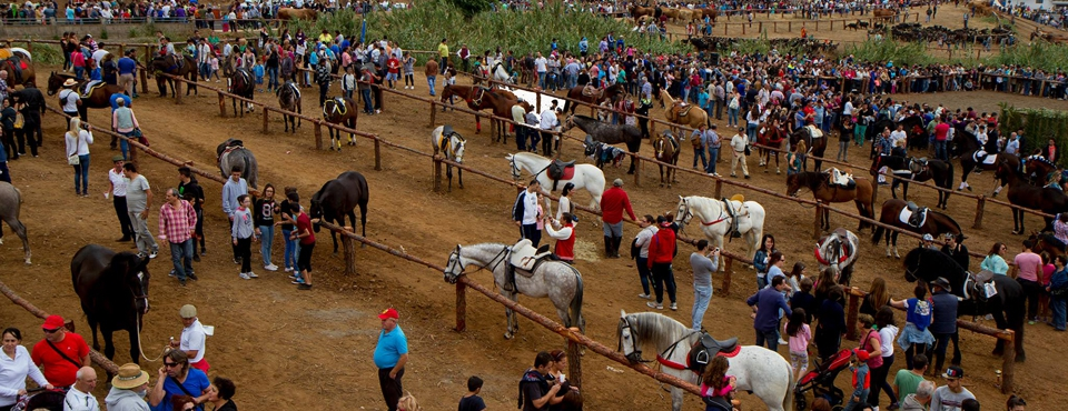 Livestock Fair in Los Realejos