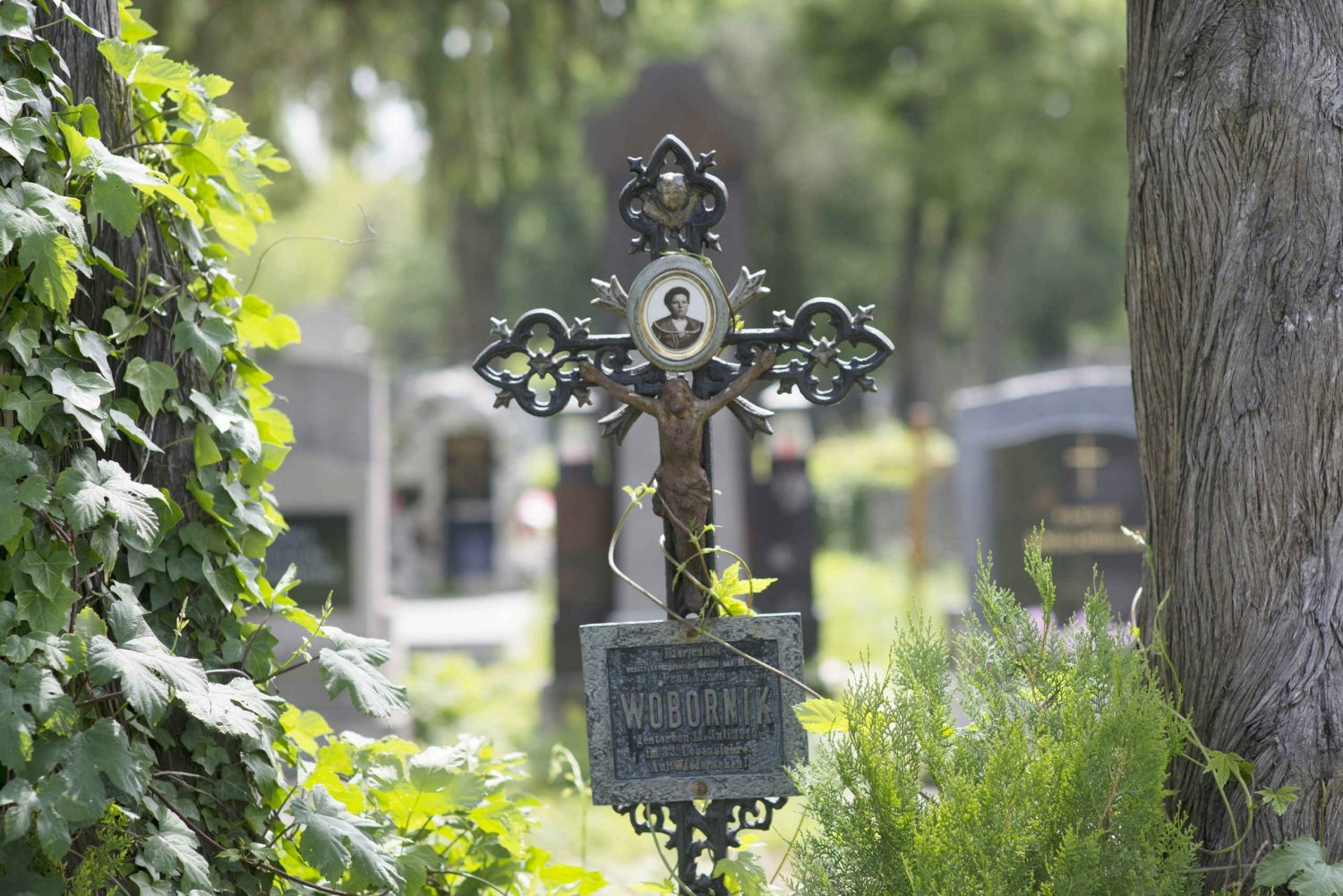 Central Cemetery ‒ City of the Dead