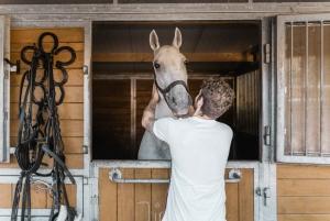 Secrets of the Fiaker & Horse-Drawn Carriage Ride