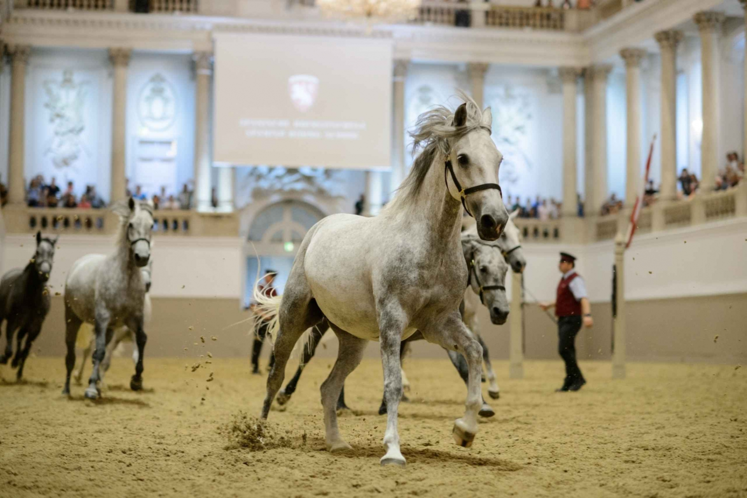Spanish Riding School Ticket: Piber Meets Vienna