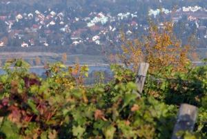 Vienna 3-Hour Hiking Tour of Wiener Wald
