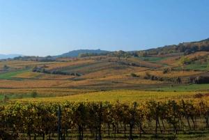 Vienna: Full-Day Vienna Woods Wine Tour