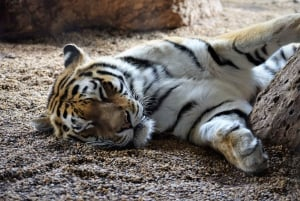 Vienna: Zoo Visit with Private Transfers & Tickets