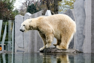 Zoo Visit with Private Transfers & Tickets
