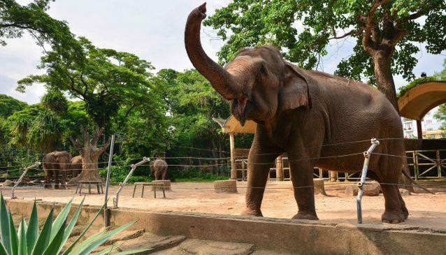 An Afternoon at Saigon Zoo and Botanical Gardens