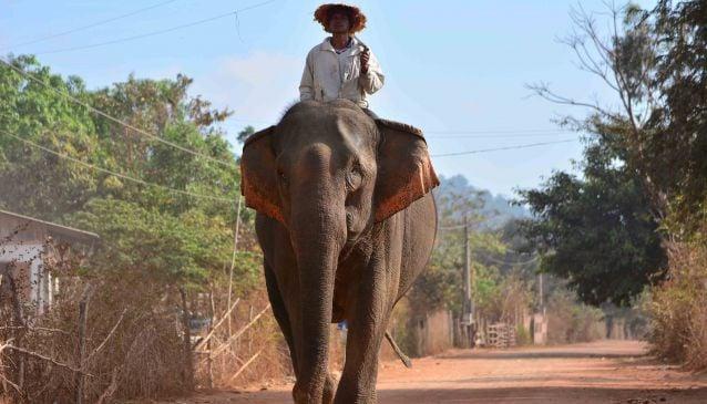 Discover the Diversity of Dak Lak Province