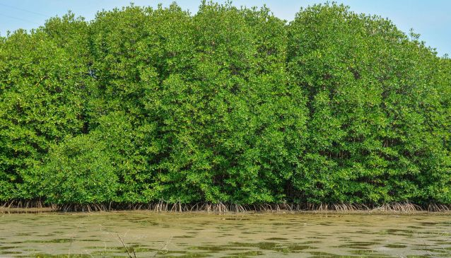 Get Lost Among the Mangroves at Can Gio
