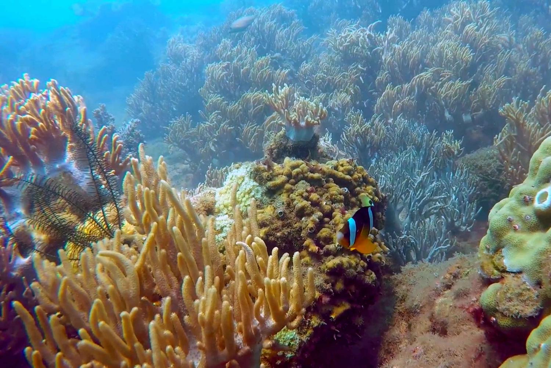 Cham Island: Underwater Walking & Snorkeling Tour