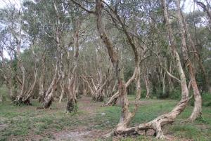Ho Coc Beach, Nature Reserve & Dragon Fruit Farm Day Tour