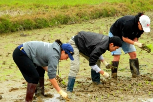 Private Wet Rice Growing Day Tour from Hanoi with Lunch