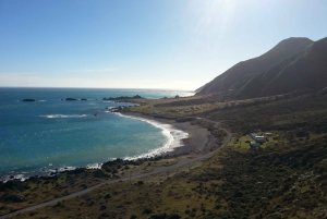 Cape Palliser: Coastal Explorer Walking Tour From Wellington