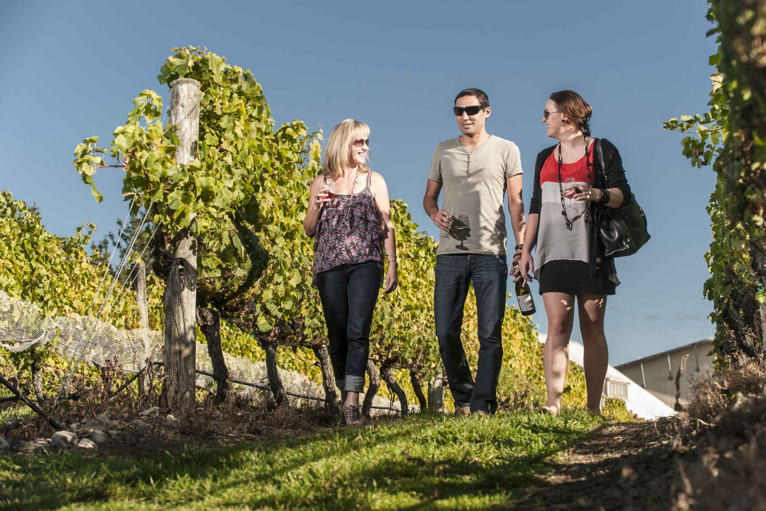 Martinborough Wine Tour with Platter Lunch from Wellington