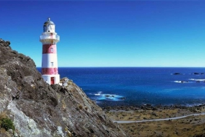 Palliser Bay & Martinborough Tour with Lunch from Wellington
