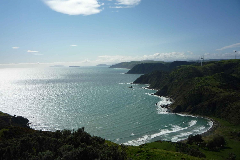 Wild Wellington Seal Colony Half-Day Tour
