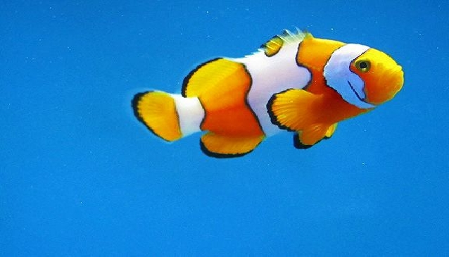 Finding More Than Nemo