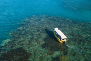 Airlie Beach: Glass-Bottom Boat Tour