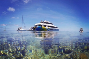Hamilton Island: Full-Day Great Barrier Reef Snorkel Cruise