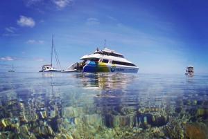 Hamilton Island: Full-Day Great Barrier Reef Snorkel Cruise