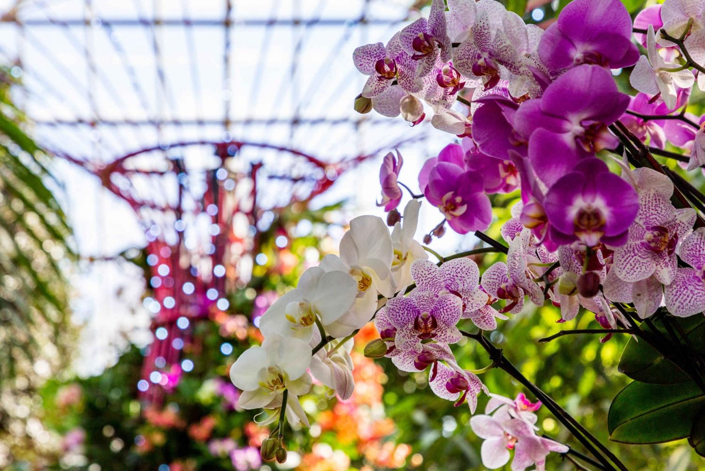 New york botanical garden all garden pass ticket in york - New york botanical garden tickets ...