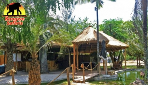 Bongwe's Big Bush Bar and Guest House