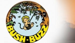 Bush Buzz