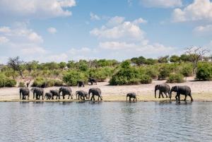Chobe: 2-Day Mobile Camping Safari