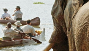 Chongwe Safaris
