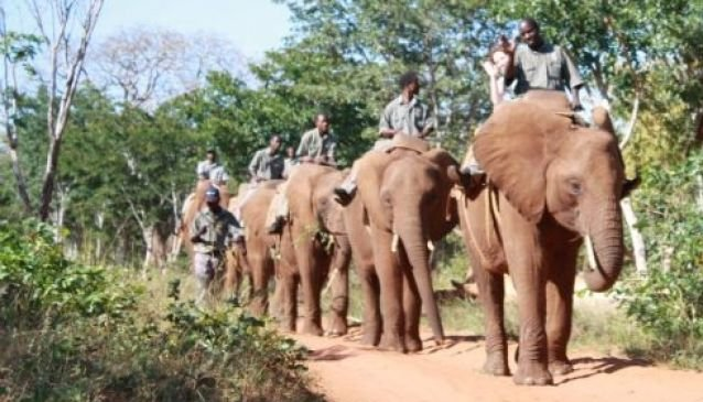 Elephant Back Safari - Mukuni Big Five Safaris