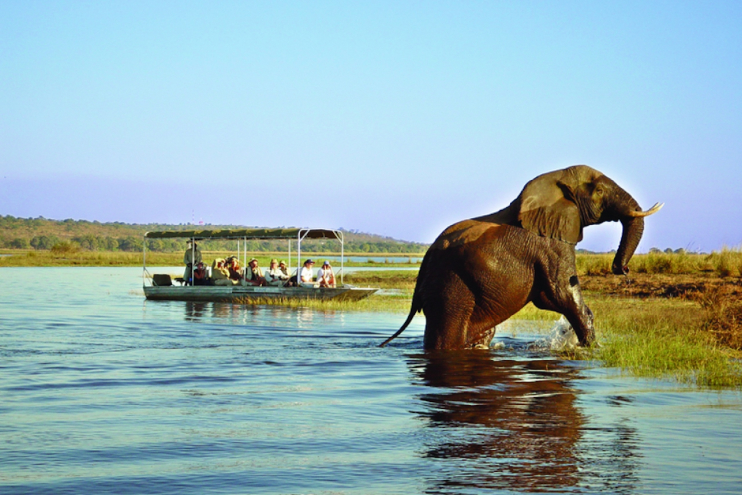 From Livingstone: Cruise & Game Drive in Chobe National Park