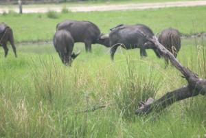 From Livingstone: Mosi oa Tunya Park Game Drive