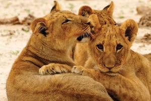 From Victoria Falls: Hwange National Park Day Trip & Safari