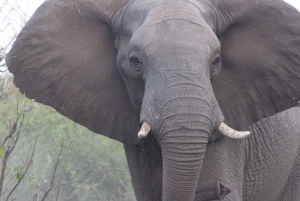 From Victoria Falls: Sunrise to Sunset Chobe Safari