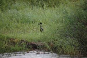 Livingstone National Park: Half-Day Bird Watching Tour