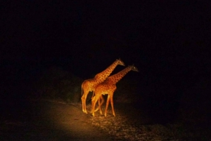 Victoria Falls: Night Game Drive and 3-Course Bush Dinner