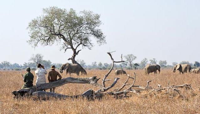 Walking Safaris - Shenton Safaris