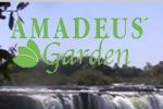 Amadeus Garden Guest House